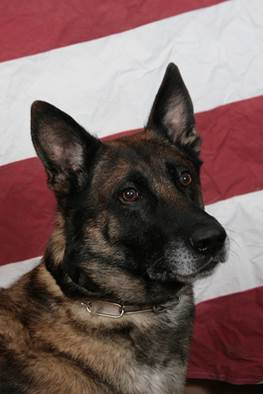 Jackson, a K9 unit with the RCPD retires after 9 years in the service.