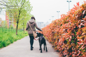 Back view of young caucasian woman walking outdoor in a city park with her dog on a leash - friendship, leisure, pet concept
