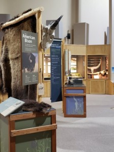 """The Mammoth Site """"Bison Exhibit"""", Courtesy FB"""