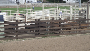 Days of '76 Rodeo grounds