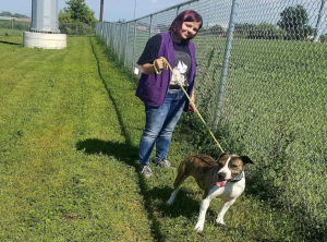 Family walking dogs at the Humane Society